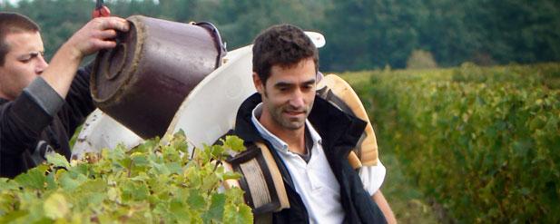 Harvest Report: Loire 2013 ...