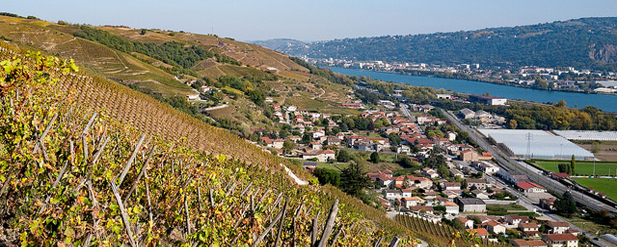 Rhone 2017 - A tale of the unexpected