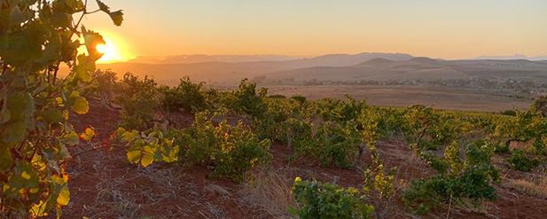 2020 Vision: Harvest in the Swartland
