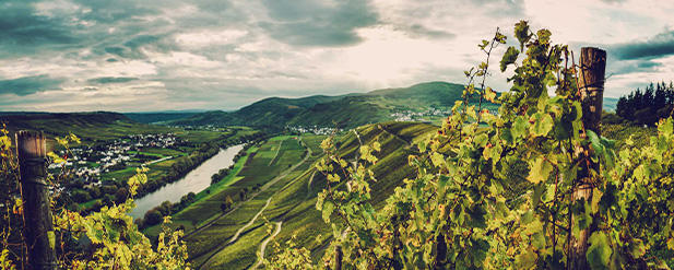 Vintage Report: Germany 2019 - Riesling's Reign