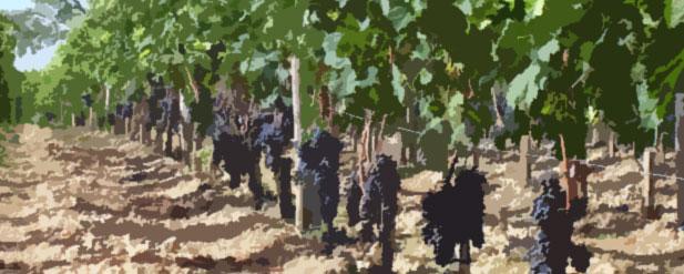 Harvest Report: Bordeaux 2014  from the Guinaudeau