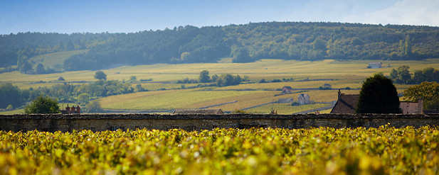 Burgundy 2019 in the words of our producers