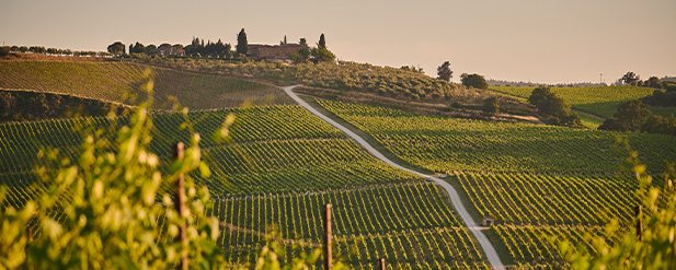 Piedmont 2017 Vintage webinar