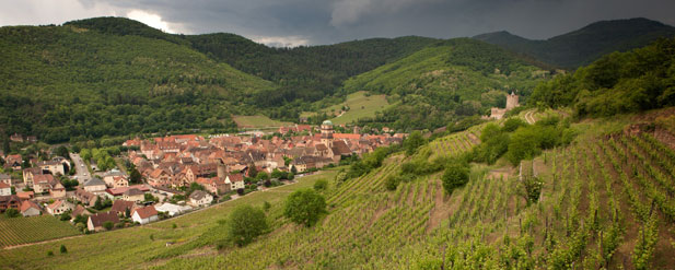 Vintage Report: Alsace 2011