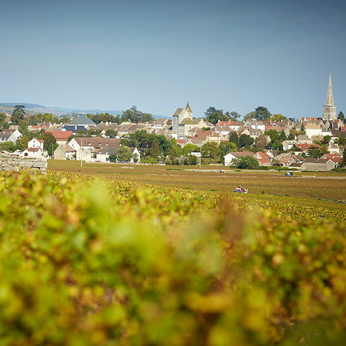 A Beaune to pick