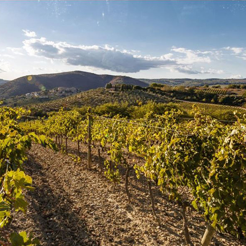 Traditional Brunello's Hottest Property