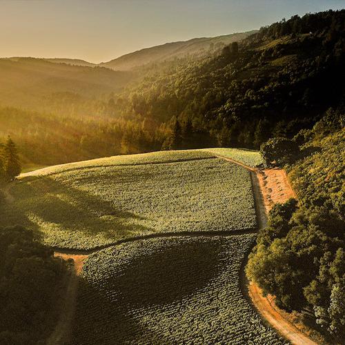 Rhys Vineyards 2018 Chardonnays - The Golden Mean