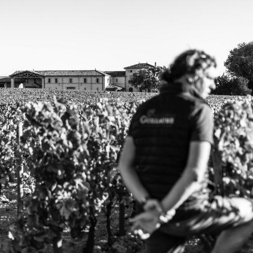 Bordeaux 2020: The Guinaudeau wines: Lafleur, Les Pensées, Les Perrières, Les Champs Libres and Grand Villages