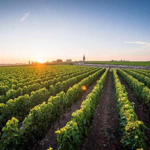 Bordeaux 2020: Canon, L'Eglise Clinet, Belair Monange, La Fleur Petrus, Troplong Mondot and Valandraud