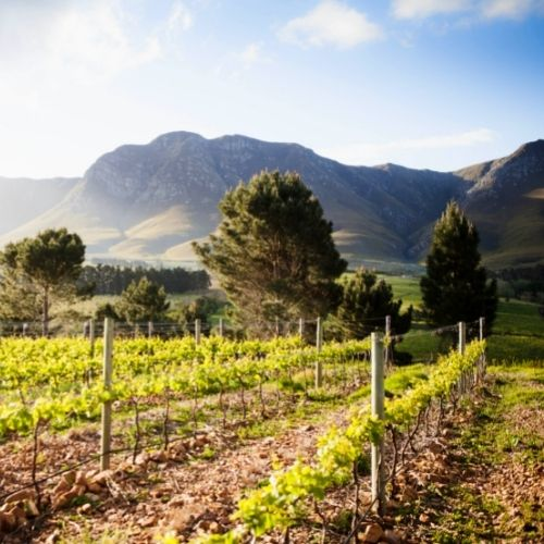 J&B South Africa Series: Storm Wines 2020s