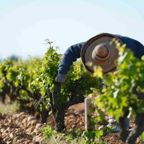 Beaucastel 2020: an all-time classic