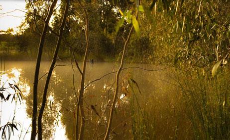 Wild Duck Creek